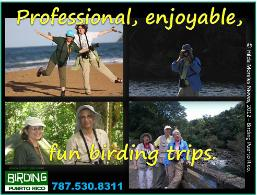 BIRDING TRIPS TO PUERTO RICO - PROFESSIONAL, ENJOYABLE AND FUN.