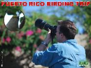 PUERTO RICO BIRD PHOTOGRAPHY - EL YUNQUE NATIONAL FOREST